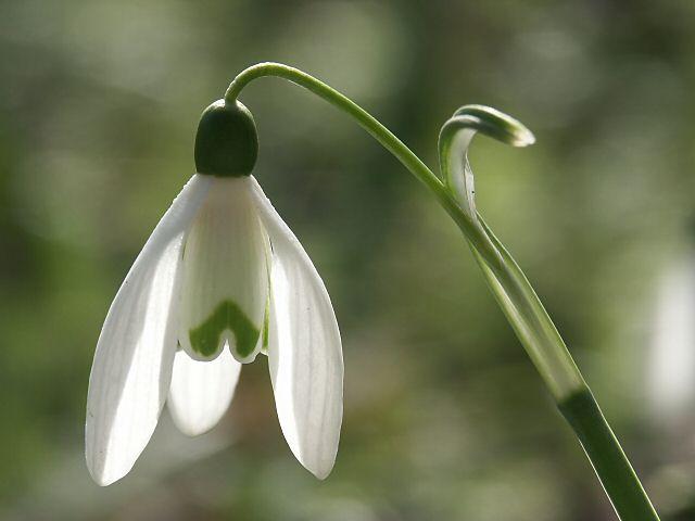 Over voorjaarsmoeheid en allergiepreventie
