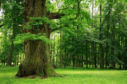 Tree tea time: over stress en niets doen