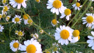 Natuurlijke remedies voor spijsverteringsklachten