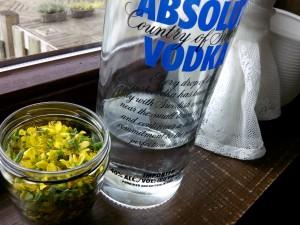 Versgeplukte sint-jansbloemetjes klaar om te 'tincturen' op wodka