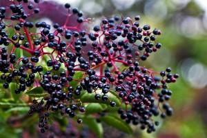Lekkers tegen koortsblaasjes, griep en lage immuniteit