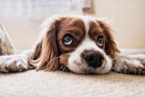 6 manieren om depressieve gevoelens en nervositeit aan te pakken