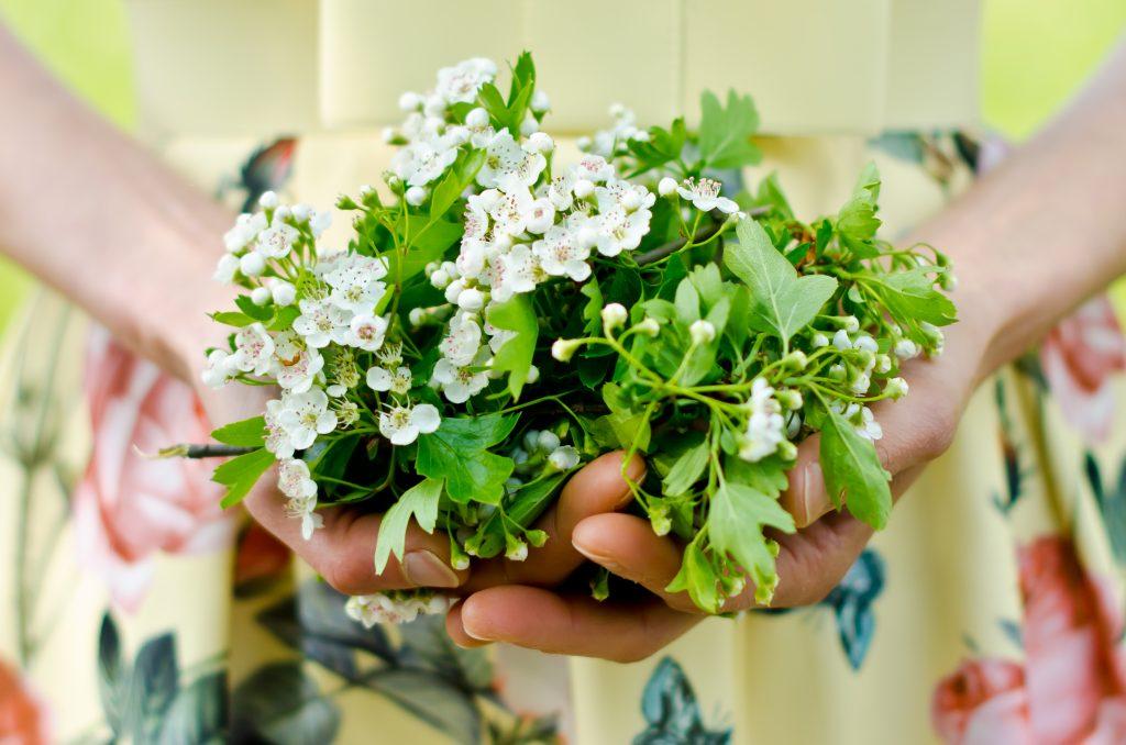 Meidoorn: prachtig kruid tegen depressie en hartkwalen